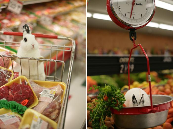 Bunny at the Market