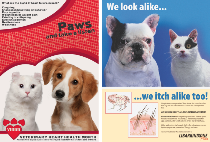 Vet Medicine Posters